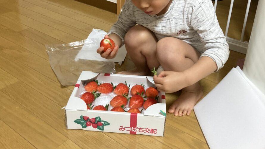 2021.03.30(Tue) イチゴに夢中な息子