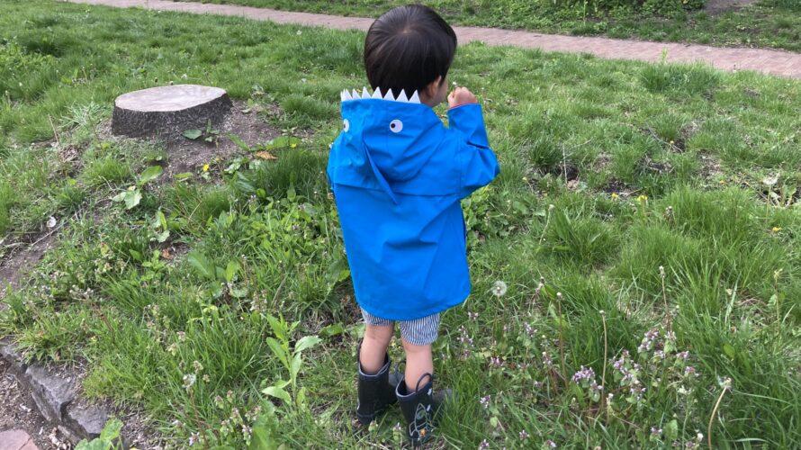 2021.05.20(Tue) たんぽぽに夢中な息子